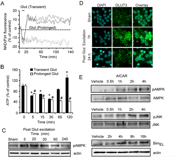 Excitotoxic injury is associated with AMPK activation and rapid changes in cellular metabolism; implications for cell death signalling