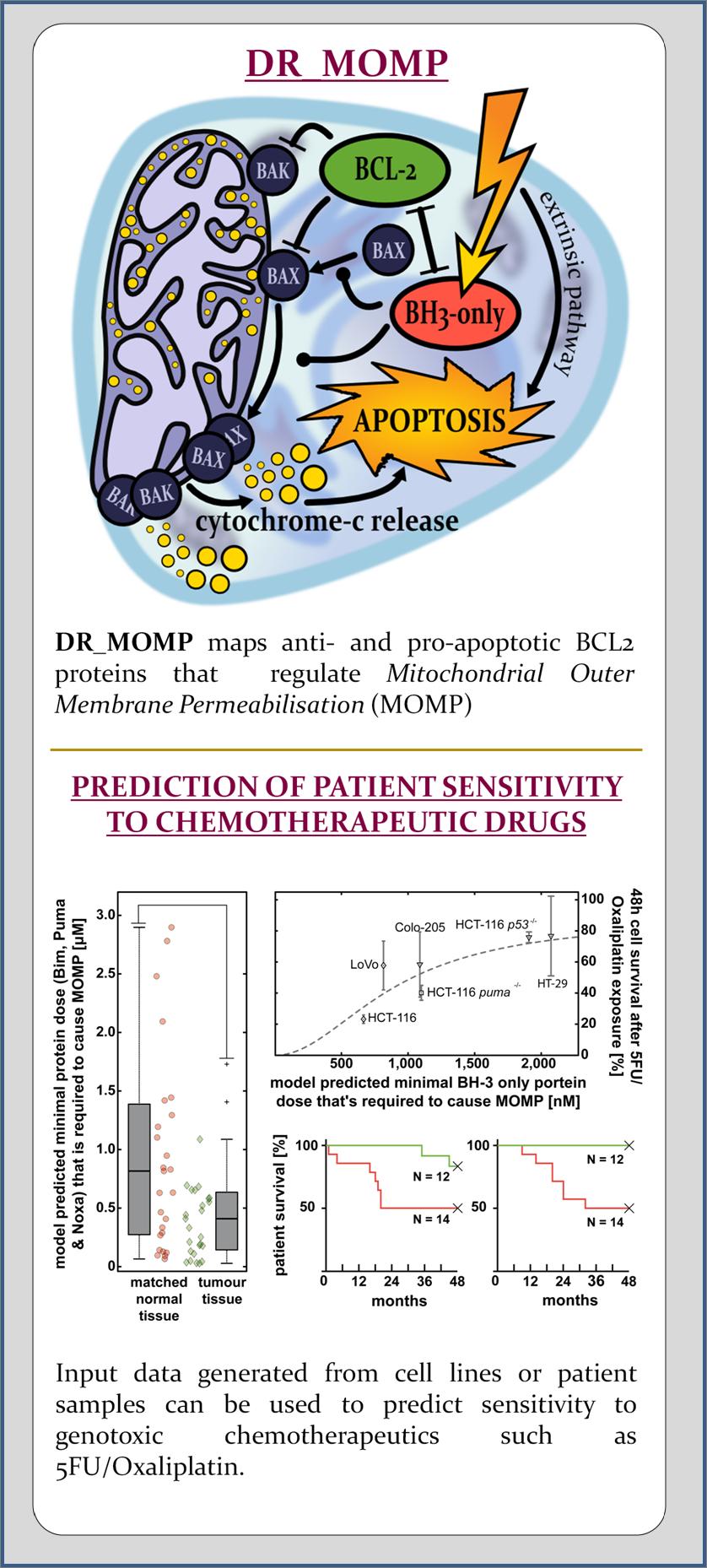 Dose-Response Medicinal Outcome Model Predictor